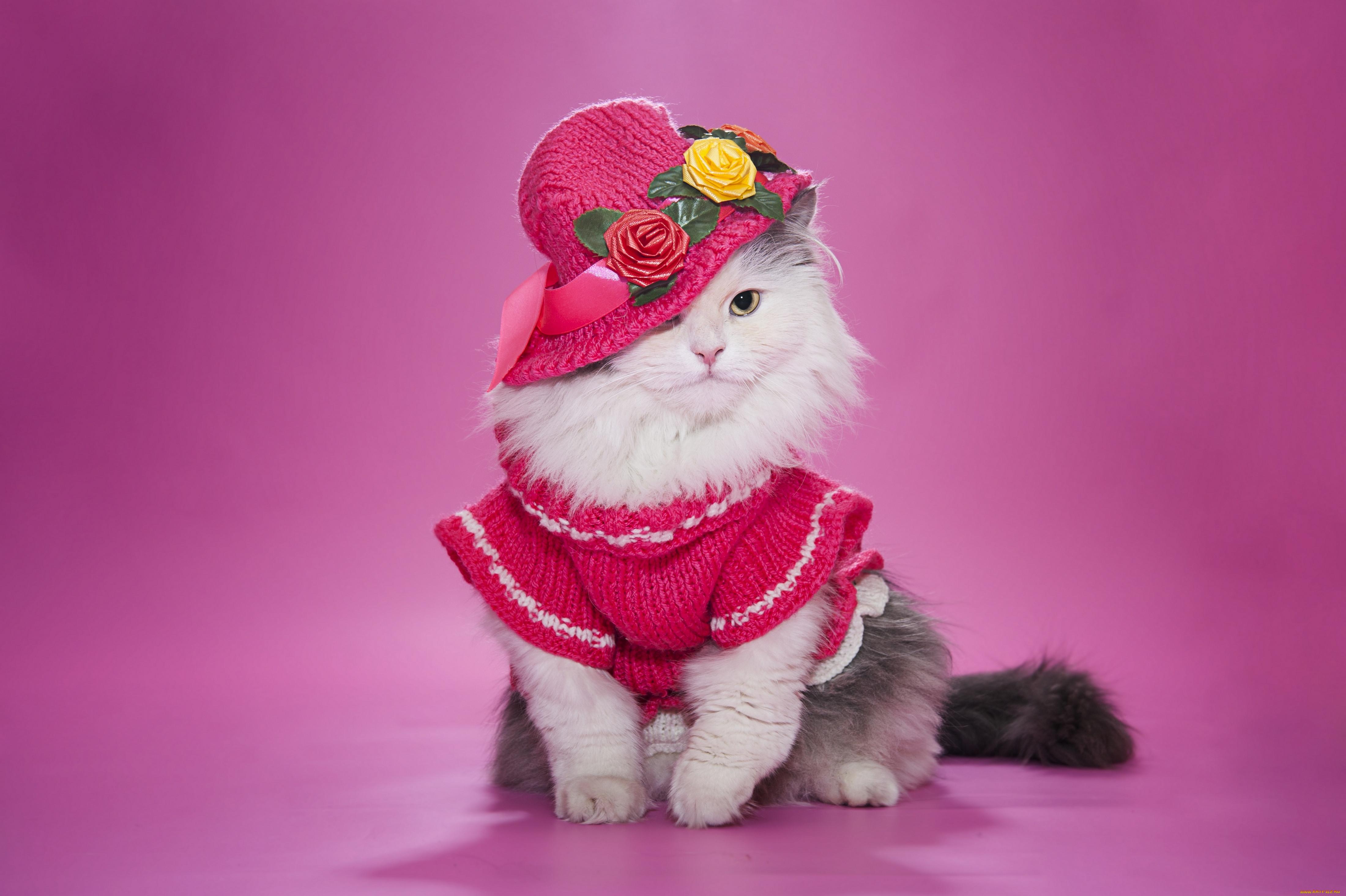 картинки элегантный кот нас